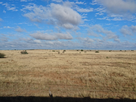 Blond field along the Shosholoza Meyl train